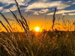 Systax e SIACON anunciam parceria direcionada ao agronegócio